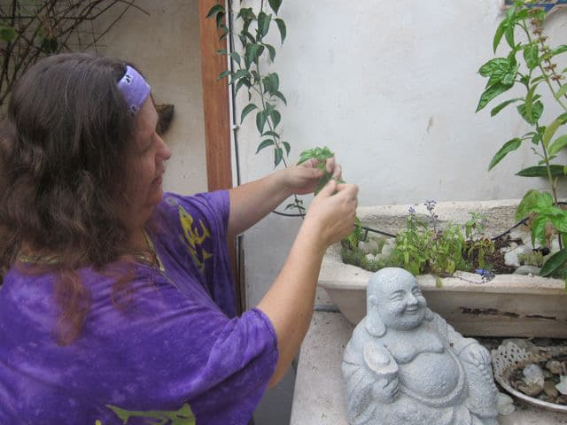 Gila's herb garden