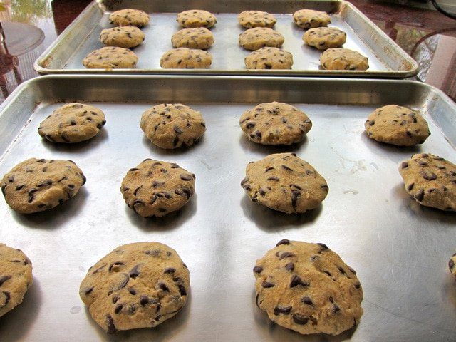 Rich and Decadent Chocolate Chip Cookies for Passover