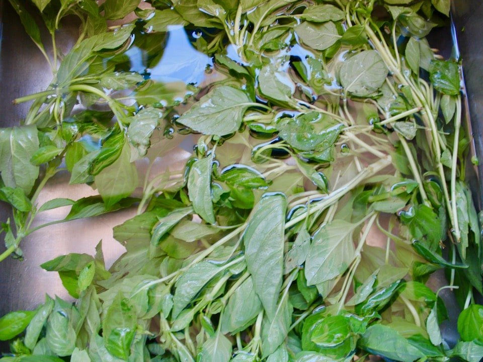 Vertical shot of fresh basil leaves floating in water.