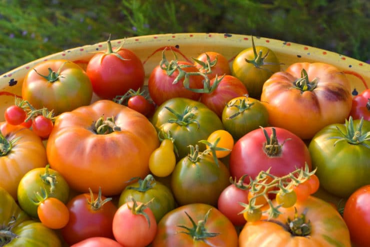 marinated heirloom tomato salad  healthy summer recipe, Beautiful flower
