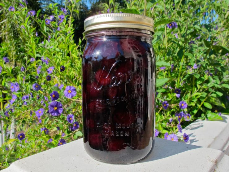 Martha Washington's Preserved Cherries - Preserve cherries in sugar syrup using a historical recipe from Martha Washington's Booke of Cookery. George Washington's favorite fruit was cherries!