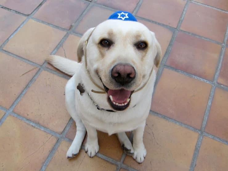 Happy Passover 2012!