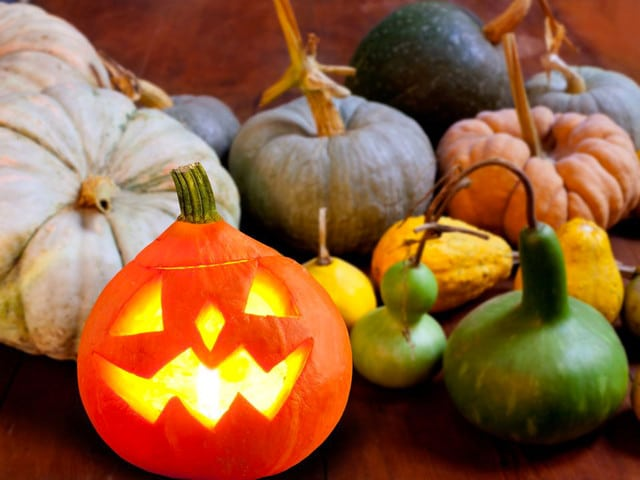 Halloween: A Foodie History - The history of Halloween food, candy sharing, carved pumpkins, and home made trick-or-treats on ToriAvey.com!