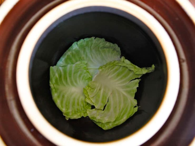 Fermentation crock overhead shot - bottom lined with cabbage leaves.