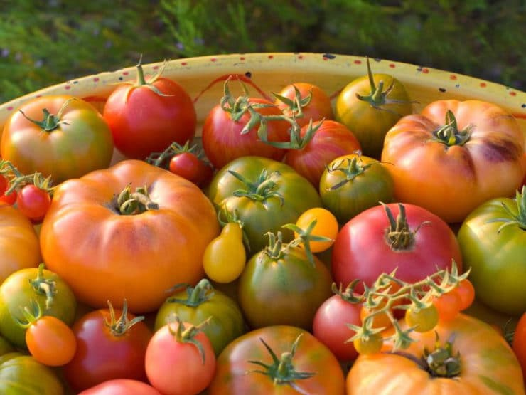 Learn the history and benefits of heirloom vegetables, from Thomas Jefferson to present, and try a recipe for Heirloom Tomato Salsa Fresca.