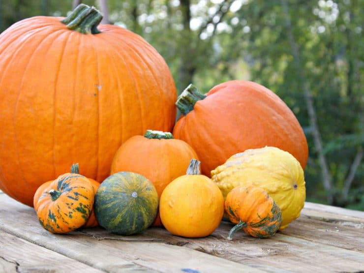 A Slice of Pumpkin History
