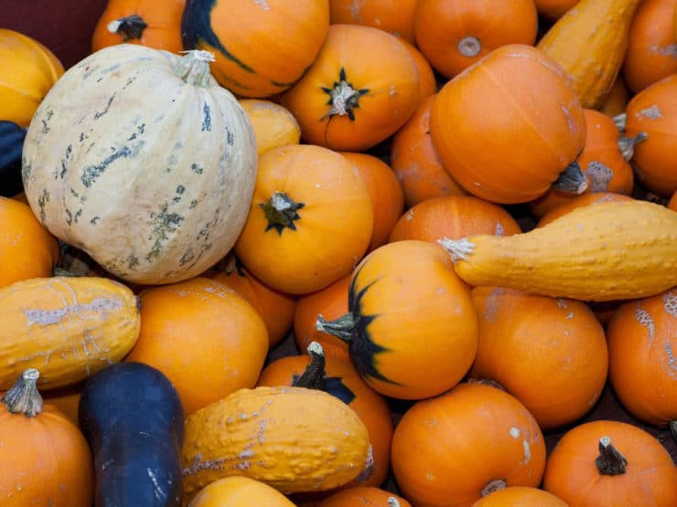 A Slice of Pumpkin History - Learn about the colorful history of pumpkins, from early Central America to present.