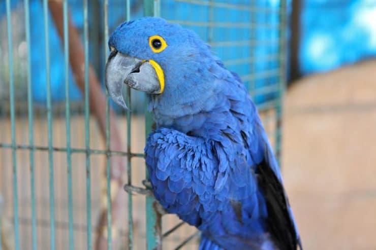 Our Parrot Solomon - Slow Cooker Vegan Chickpea Chili Recipe