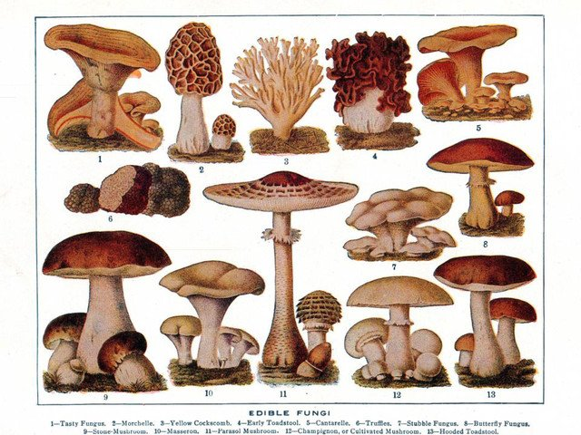 Magical Mushrooms: The Allure of Edible Fungi on The History Kitchen