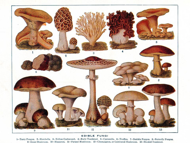 Magical Mushrooms: The Allure of Edible Fungi