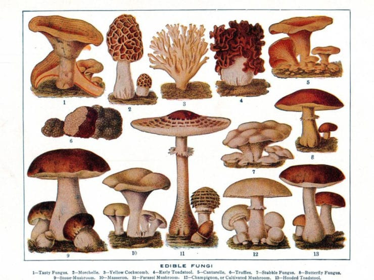 Magical Mushrooms: The Allure of Edible Fungi - Learn the history of edible mushrooms and a few other things you might not know about our favorite culinary fungi!