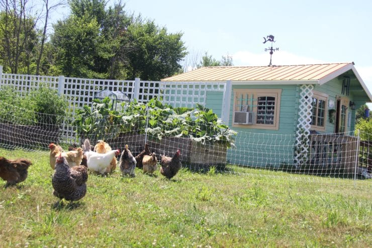 The Old Fashioned Way: The Basics of Poultry Keeping  - Sharon Biggs Waller shares the top five things every chicken owner should know, from breed choice to space requirements to keeping your chickens safe from predators.