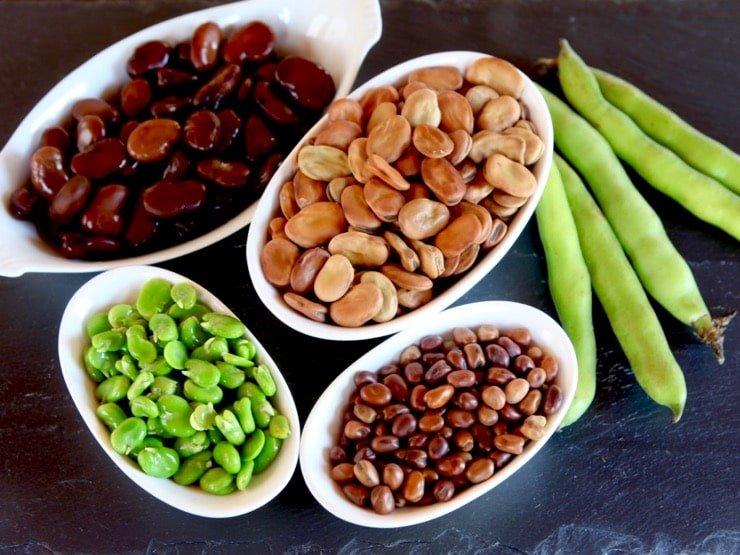Four white dishes containing different kinds of fava beans - canned fava beans, large dried fava beans, small dried fava beans, and fresh fava beans. Next to the dishes are 5 green fava bean pods.