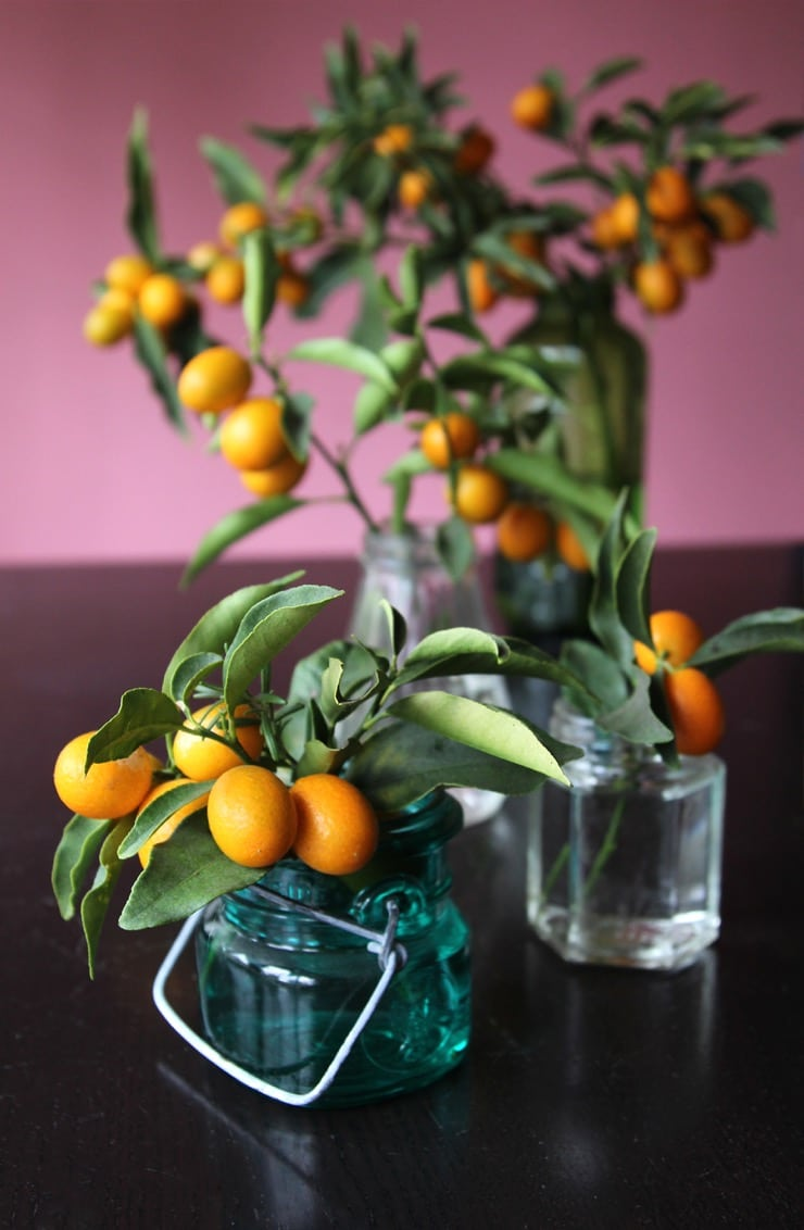 kumquats in vintage jars tori avey