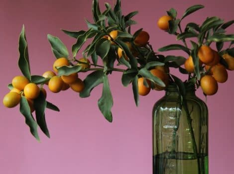 Dramatic shot of kumquat branch in green glass jar with purple background.