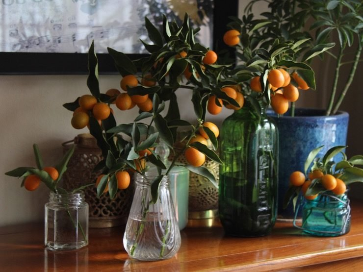 Wide shot of multiple vintage vases filled with kumquat branches on a light wooden table.