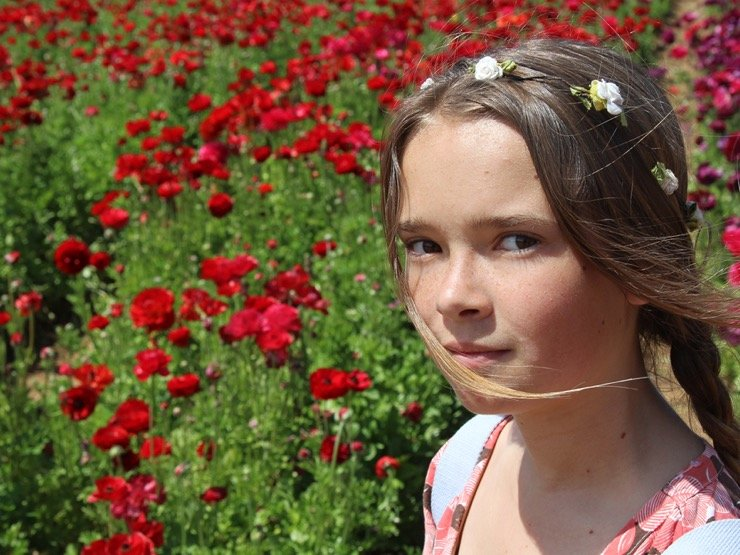 A young girl in front of a field of red ranunculus blooms.