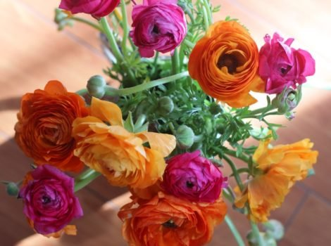Bunch of ranunculus in various colors.