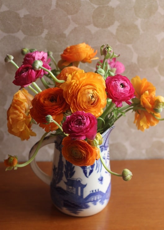 Colorful ranunculus blooms in a blue and white pitcher on a wooden tabletop.
