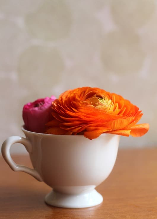 Orange and pink ranunculus blooms in a white teacup on a wooden table.