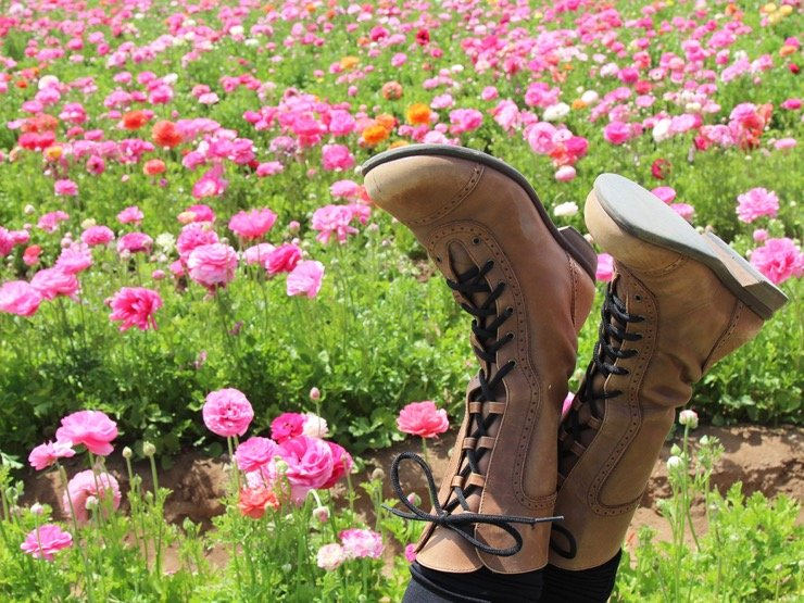 A pair of women's feet in brown boots are kicked up in front of a field of pink ranunculus blooms.